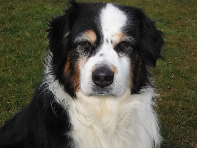 Как выбрать собаку себе по душе: дельные рекомендации будущим владельцам