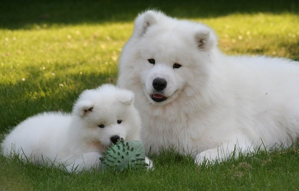 Четырехлапый друг: 34 породы собак для детей