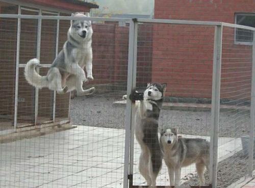 Комфортные вольеры для собак: делаем своими руками без трат и ошибок