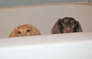 Пособие по чистоте: как мыть и купать щенка