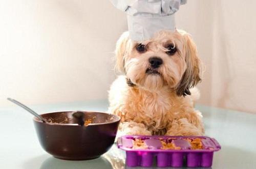 Самая лучшая каша для щенка: накормите вкусно и полезно