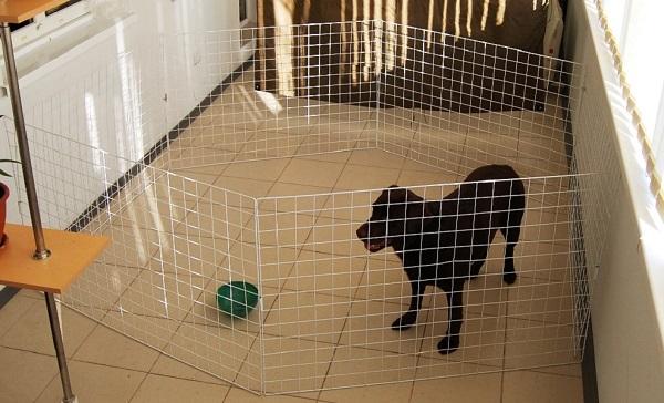 Самые лучшие вольеры для собак и щенков в квартиру: как сделать своими руками дешево и качественно?