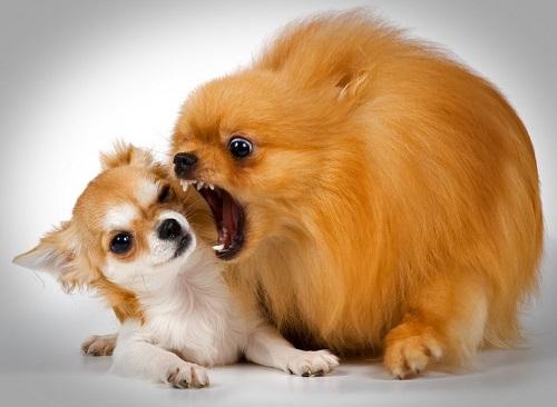 Как отучить щенка кусаться: почему и когда перестанет сильно грызть и рычать, что делать, чтобы не хватал постоянно за руки, как воспитывать хаски, лабрадора, йорка?