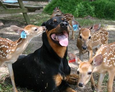 Клички на любой вкус для собак девочек: 285 эксклюзивных имен