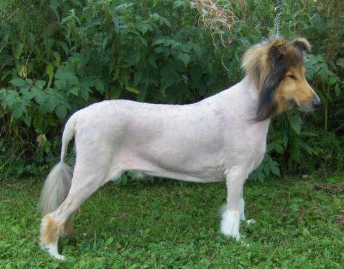 Более 300 кличек для овчарок: имена для собак мальчиков и девочек