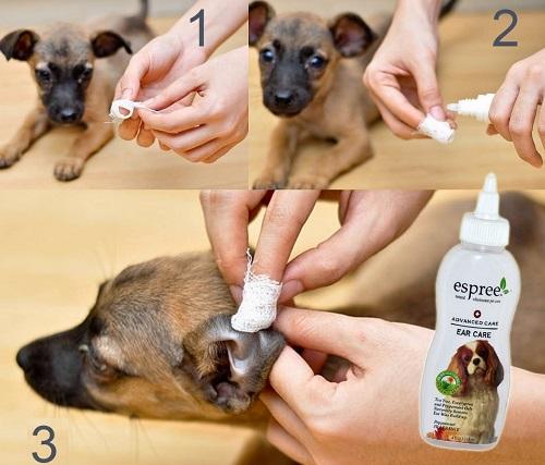 Без боли и капризов: подробная инструкция как чистить уши собаке
