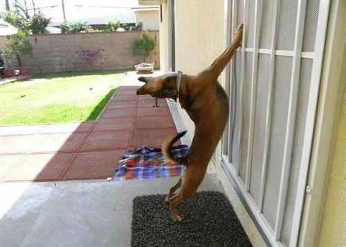 17 причин, почему собака воет и инструкции, как отучить