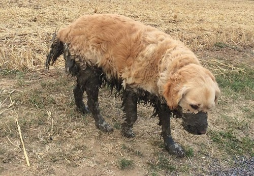 Грязи бой: как часто и чем можно мыть собаку?
