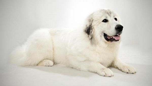 Челябинская сторожевая собака: единственное реальное фото