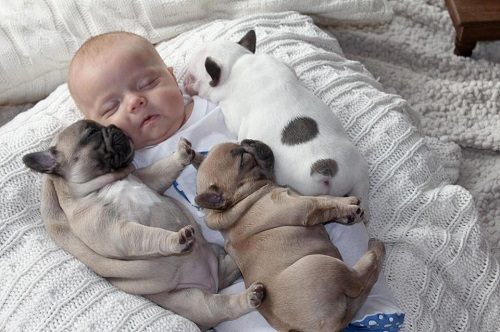 Заменитель сучьего молока для щенков: искусственное вскармливание сироток