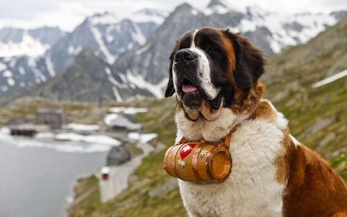 Верные собаки компаньоны: 26 уникальных пород