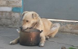 Советы и рецепты от опытных кинологов: каша для собаки