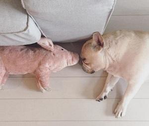 Кормить собаку во сне: 10 проверенных сонников расскажут вам правду