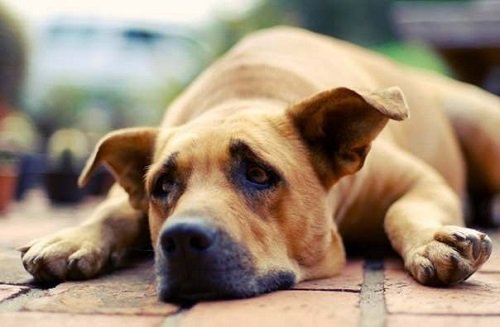 Кипятись!!! почему скулит собака Вами согласен