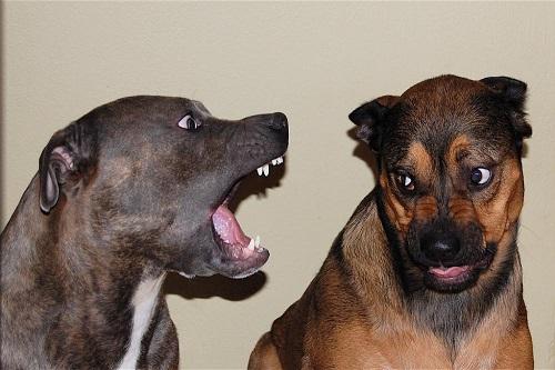 Доктор Гав: как отучить собаку лаять дома?