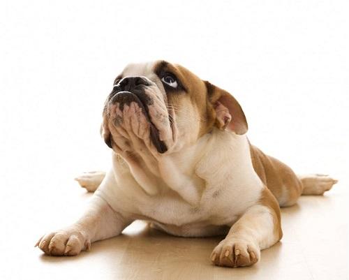 Опасность рядом: почему собака скулит и как ее отучить?
