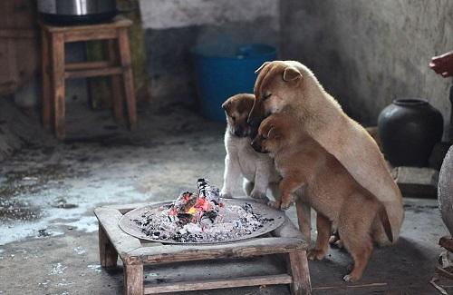 Кормление на все случаи жизни: чем кормить собаку в 20 конкретных случаях