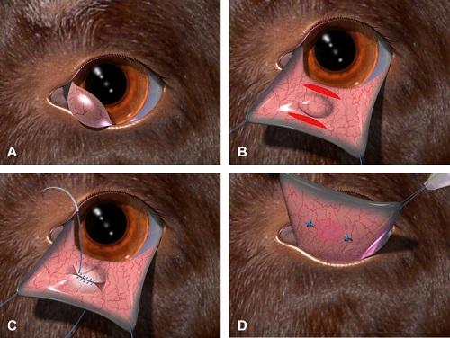 Самые вероятные болезни третьего века у собак и грамотное лечение