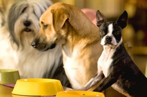 Чем кормить собаку в домашних условиях: рацион кормления натуральной пищей и меню на неделю