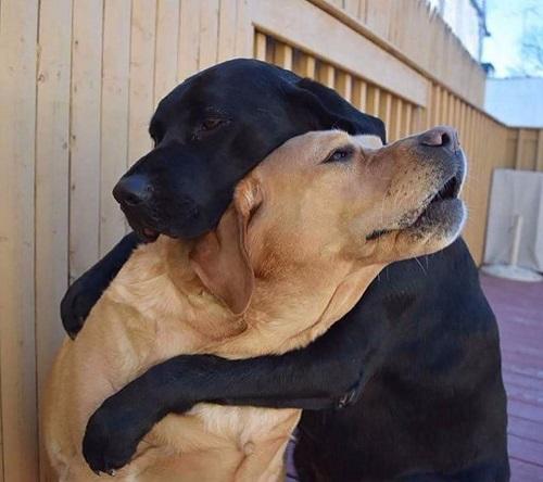 Собачьи слезы: могут ли собаки плакать?