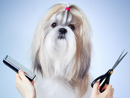 16 расчесок для собак: подробно о каждой из них