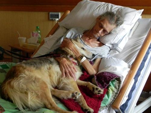 Как понять, что собака болеет: признаки здоровой и больной