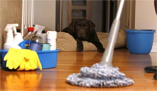 Как спасти питомца от смертоносного вируса: энтерит у собак