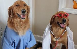 Долгоживущие собаки породы