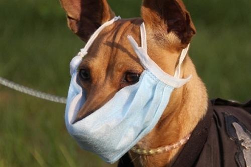 Может ли щенок заболеть ветрянкой thumbnail
